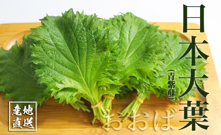 【台北濱江】油炸食物與烤肉的最佳夥伴 ╣日式蔬菜新上市╠ 日本大葉*青紫蘇*