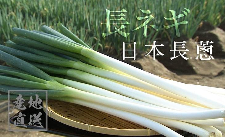 【台北濱江】超巨大!口感細緻美味甘甜的長大蔥!╣日式蔬菜新上市╠ 日本長蔥