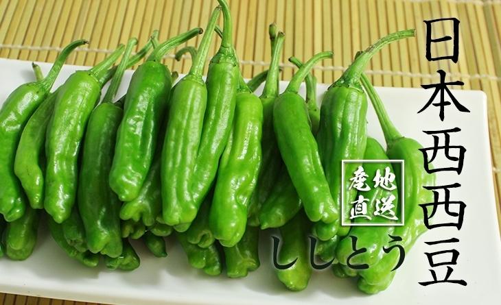 【台北濱江】串燒烤肉的最佳夥伴!╣日式蔬菜新上市╠ 日本西西豆