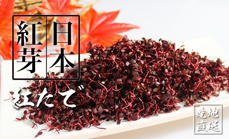 【台北濱江】美麗的紅色小葉草?美味食材視覺享受!╣日式蔬菜新上市╠ 日本紅芽?巧u紅