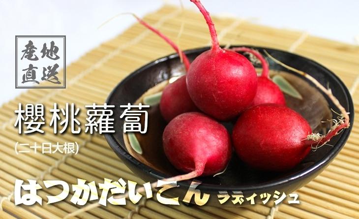 【台北濱江】顏色鮮麗、紅皮白心的小巧蘿蔔!╣日式蔬菜新上市╠ 日本櫻桃蘿蔔・二十日大根