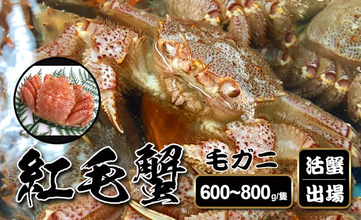 活蟹出場【台北濱江】日本三大名蟹之紅毛蟹600~800g/隻