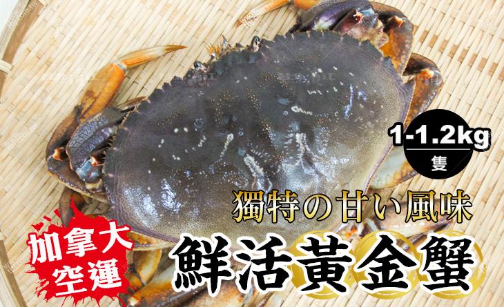 【台北濱江】【鮮活】不容錯過的獨特鮮甜味!加拿大空運直送鮮活黃金蟹1.0-1.2kg/隻