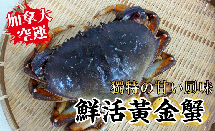 【台北濱江】【鮮活】不容錯過的獨特鮮甜味!加拿大空運直送鮮活黃金蟹約600g/隻