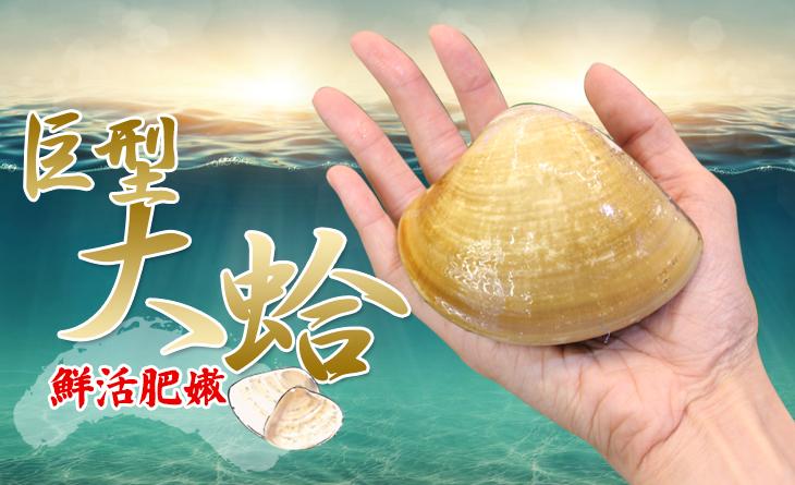 【台北濱江】鮮活巨型大蛤 1台斤±10%/包(約3個)火烤跟湯物最能體驗滿溢的海味!