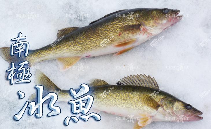 【台北濱江】一吃就上癮!高級海味食材~吃了還想再吃~水晶冰魚250~300g隻