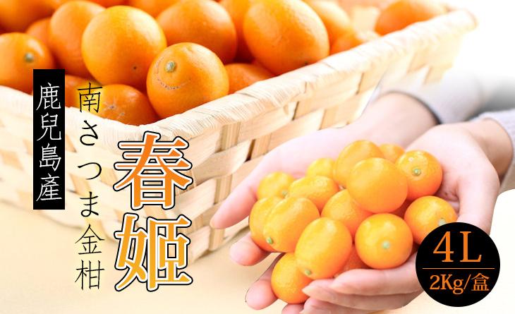 【台北濱江】日本鹿兒島4L春姬金柑2kg/盒~溫室種植,連皮帶著吃多汁甘甜
