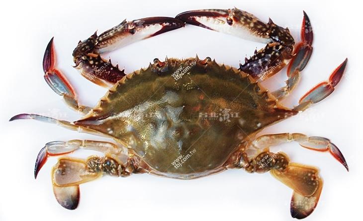【台北濱江】美國人的大閘蟹~老饕必吃的藍顏知己!斯里蘭卡船凍野生藍蟹150-200g/隻