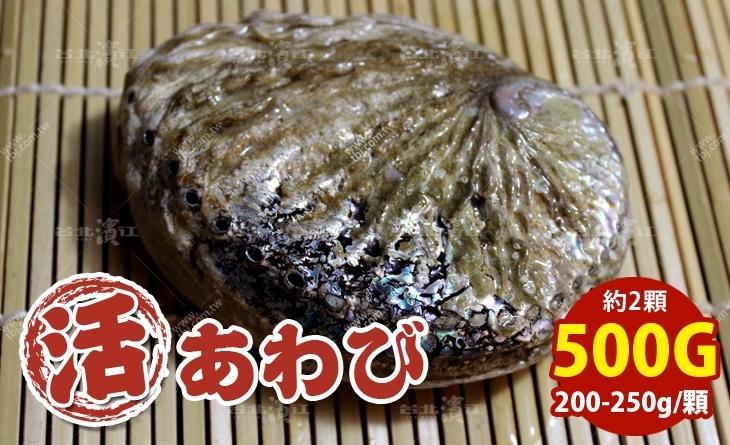 【台北濱江】口感爽脆鮮甜~吃了就無法忘懷的好滋味~南非活鮑魚200-250g/顆_500g約2顆