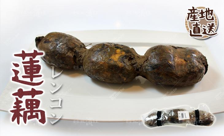【台北濱江】自然甘甜清香!涼拌煮湯都很棒!日式蔬菜新上市-蓮藕650-700g/一根