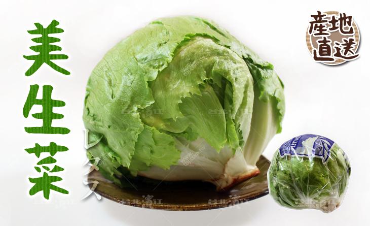 【台北濱江】生熟爽口都好吃!沙拉的好夥伴!日式蔬菜新上市-美生菜500-600g/顆