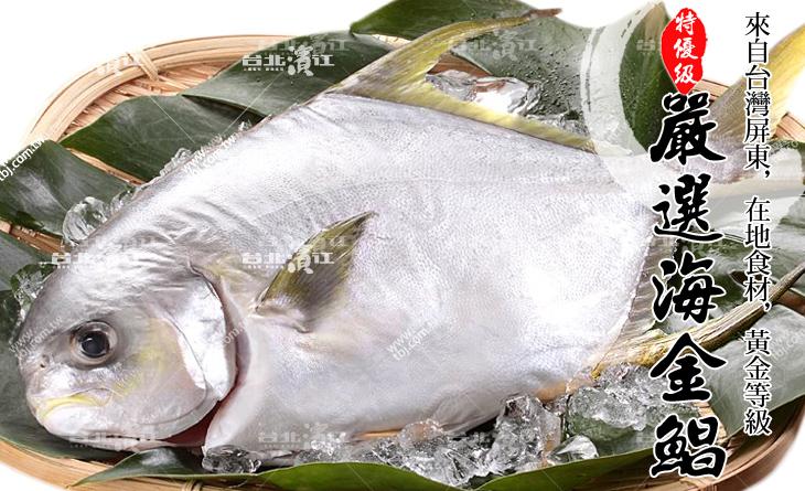【台北濱江】大海的鮮甜~口感細緻緊實肥美~家庭必備!嚴選特優級海金鯧500~600g/尾