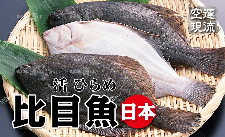 【台北濱江】肉質鮮嫩細緻~難忘的口感!空運現流新鮮比目魚1~1.5kg/尾