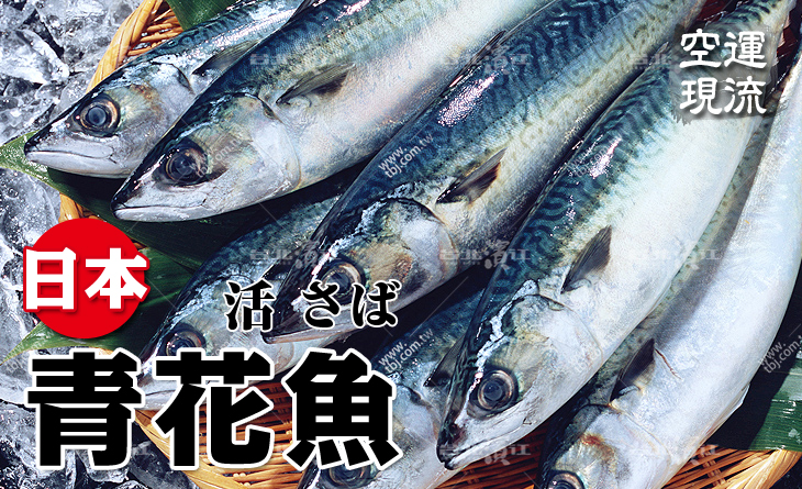 【台北濱江】日式料理店?人氣王!空運現流日本青花魚500~700g/尾