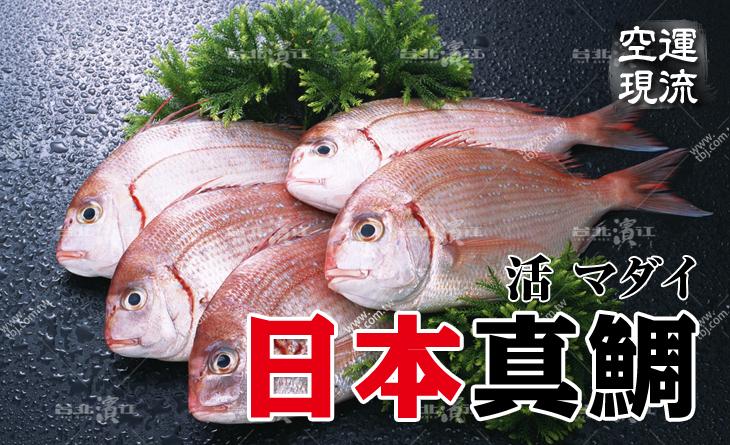 【台北濱江】日本鯛?鮮甜滋味!口感細緻高雅~清爽甘美~空運現流日本真鯛2.5kg/尾
