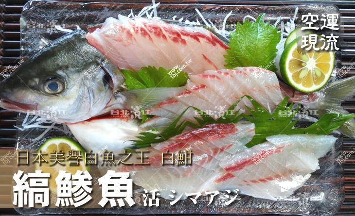 【台北濱江】白魚?魚王~口感清甜爽脆~刺身絕對不能錯過!空運現流新鮮縞?魚白魽2kg/尾