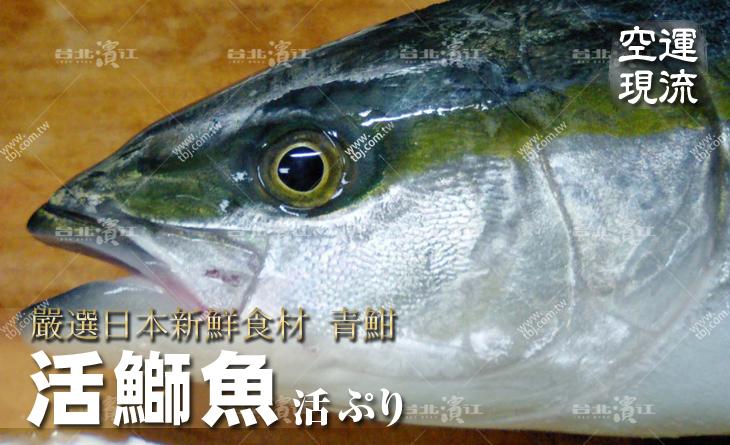 【台北濱江】老師傅最愛!生魚片必吃~入口即化~空運現流~新鮮活鰤魚青魽6~7.5kg/尾