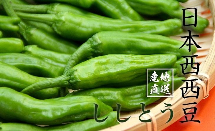 【台北濱江】串燒烤肉的最佳夥伴!╣日式濱江 魚 市 交通蔬菜新上市╠ 日本西西豆