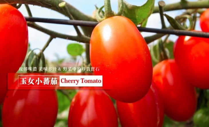 【台北濱江】野菜的珍貴寶石-玉女小蕃茄6網 路 美食00g/盒